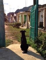 Dog waiting for master