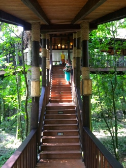 Up to the treehouse room