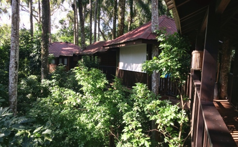 Our treehouse rooms