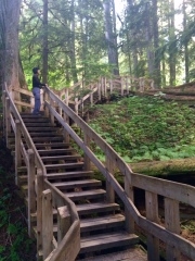 Stairs to look down the forest