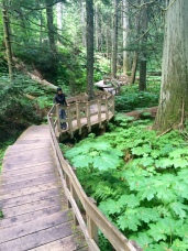 Boardwalk through dense plants