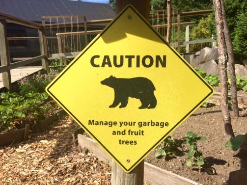 Caution - Bears!