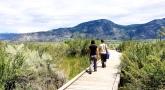 Guided Walk at Desert Center