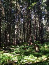Forest around the Blanket Creek