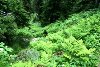 Going down in the dense forest