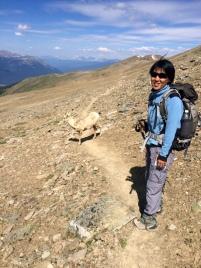 Ridge Walk with wild mountain Goat