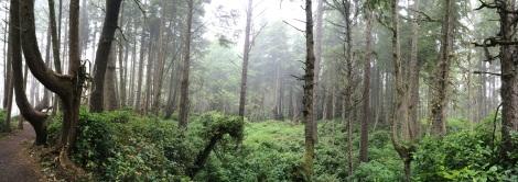Deep forest looks like amazon jungle