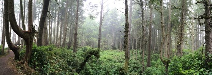 The deep forest looks like an Amazon jungle