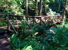 Bridge made out of giant log