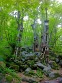Forest art?