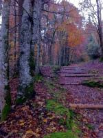 Gradual climb in the autumn forest in the fresh air