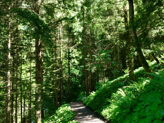 """Peaceful forest walk down to another """"tobel"""""""
