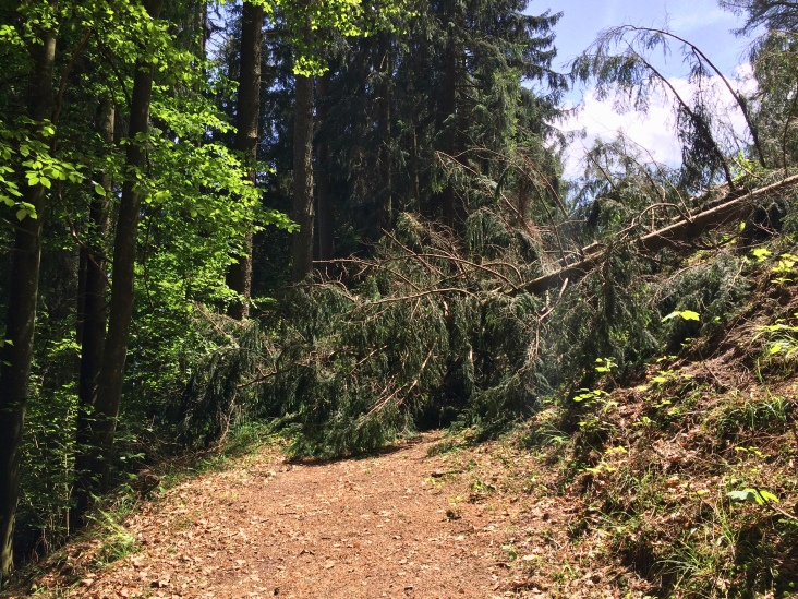 Today's last challenge: several fallen trees blocked the path completely.