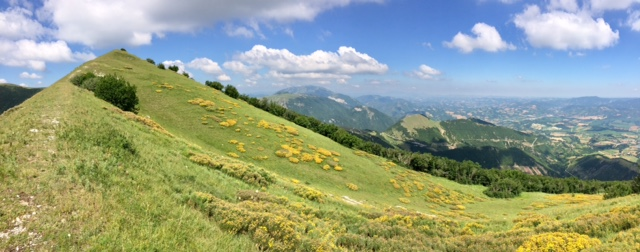Flowers on the mountainslope