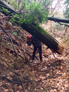 Tokaido Trail was damaged by last year's typhonn