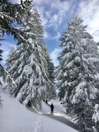 Deep in snow