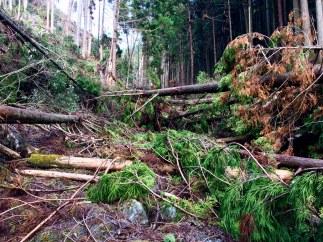 Fallen trees everywhere