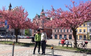 Decin square with Sakura in full bloom!