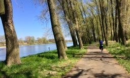 A bike path along the Elbe