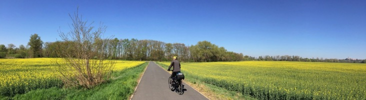 Biking in the middle of rapeseed field