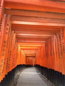 Fushimi Inari in the morning