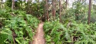 Very green ferns