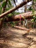 Fallen trees on the path