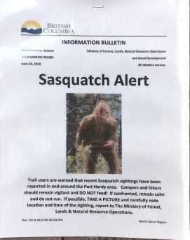 Sasquatch?