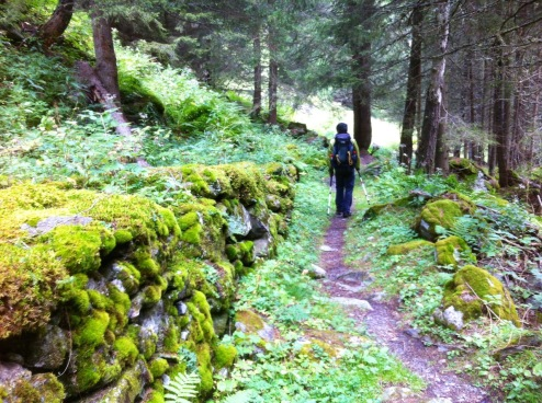 Stones with velvety moss