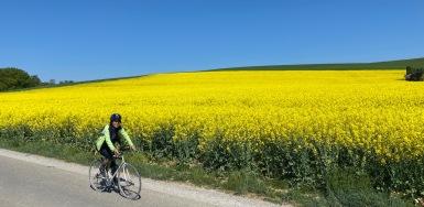 Biking through the vivid rapeseed field