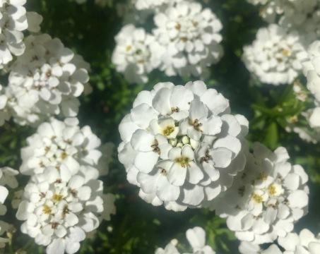 Beautiful flowers in the Alpin Garden