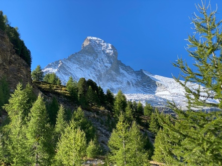 Matterhorn above the pine forest