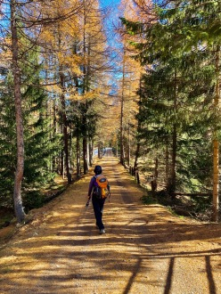 Walking through the larch forest