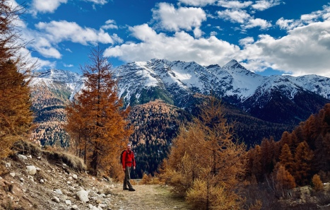 Dramatic background with orange larch trees